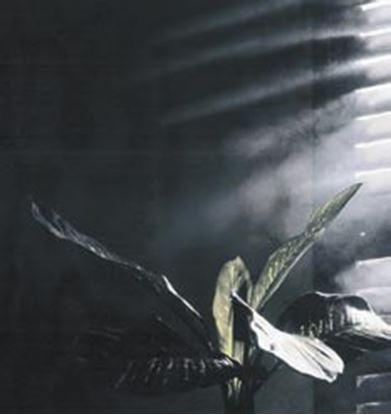 Picture of Trikové efekty - SMOKY EFFECT Mlha